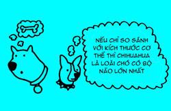 http://nhakhoa126.com/hinhanh/tin%20tuc/nha-khoa-ky-luc-chihuahua.jpg