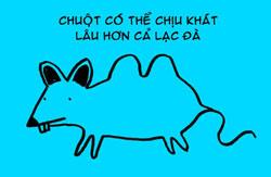 http://nhakhoa126.com/hinhanh/tin%20tuc/nha-khoa-ky-luc-chuot.jpg